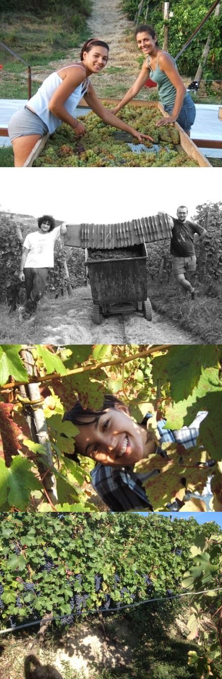 Wines From Piedmont Azienda Bragagnolo - Valle Bagnario, Strevi