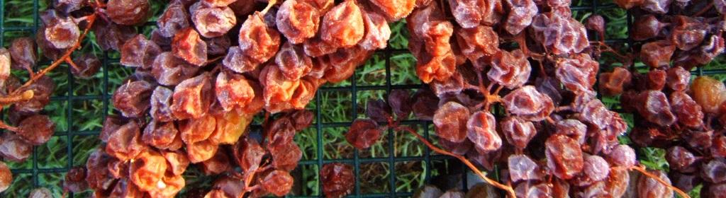 i migliori passiti del Piemonte Strevi Doc da uva moscato bianco