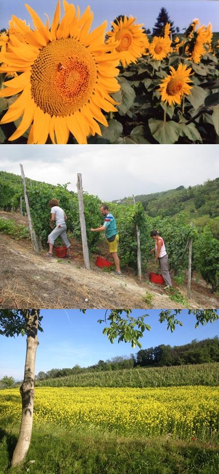 turismo-piemonte-monferrato